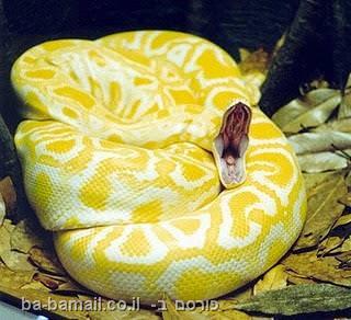 10 הנחשים היפים בעולם