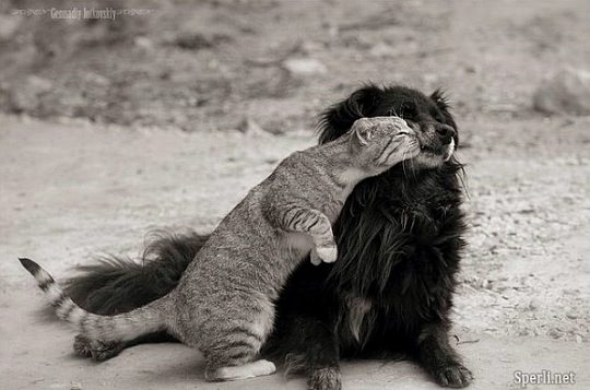 תמונות מדהימות של בעלי חיים
