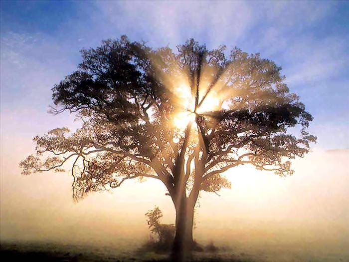 התעוררות רוחנית