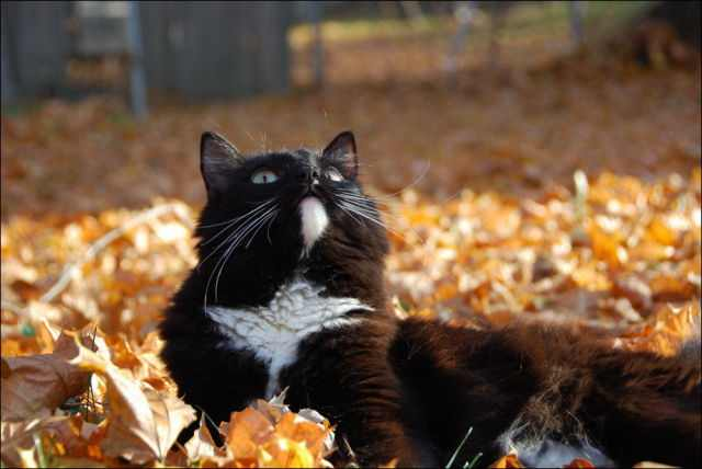 beautiful photos of fall
