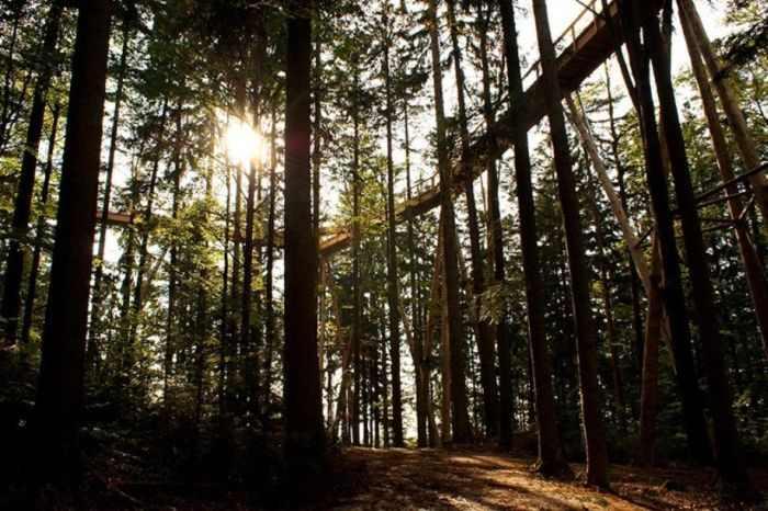 טיפוס אל צמרת העץ בבוואריה