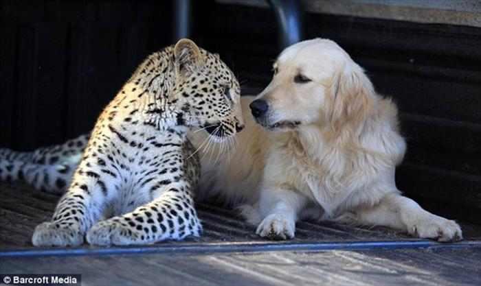 חברויות מיוחדות של בעלי חיים