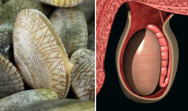 foods that look like bodyparts