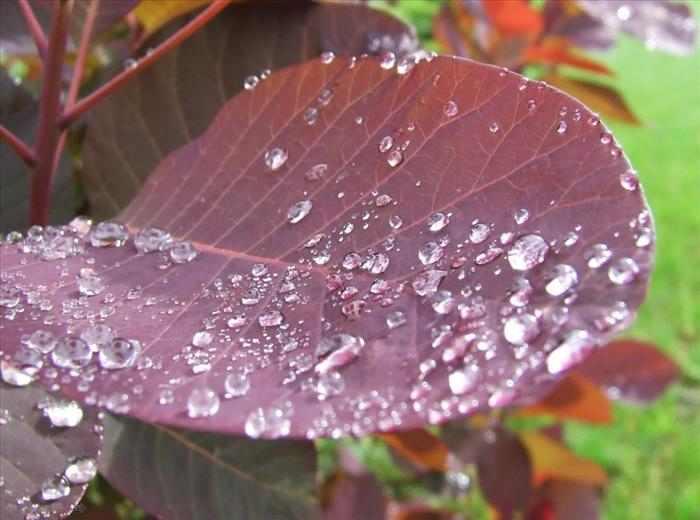 פרחים בגשם