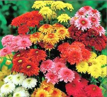 המשמעות של פרחים ליום האהבה