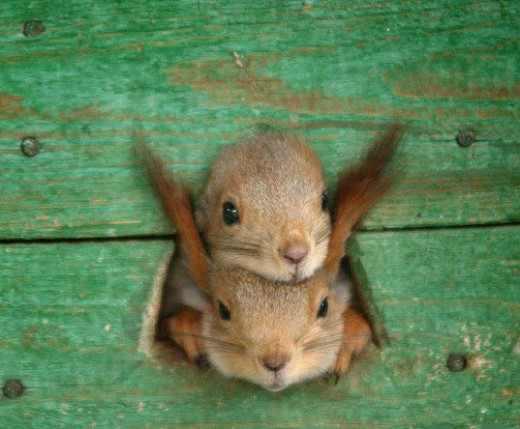 בעלי חיים קטנים ושובבים