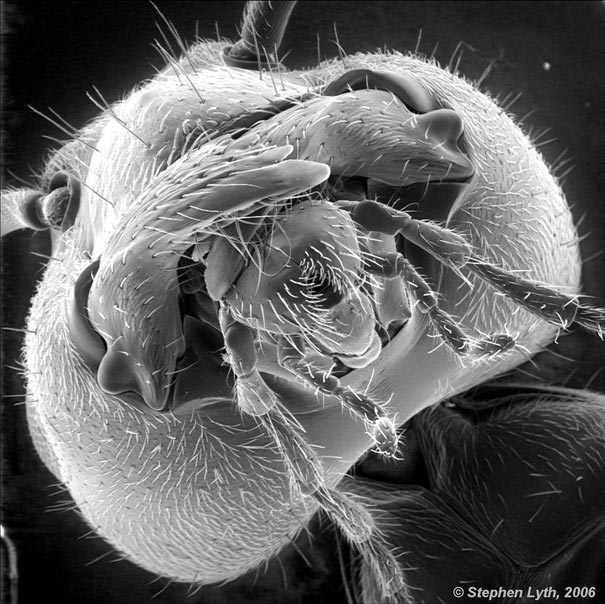 מיקרוסקופי
