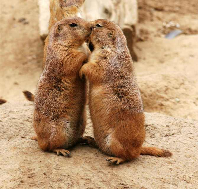 animals kissing