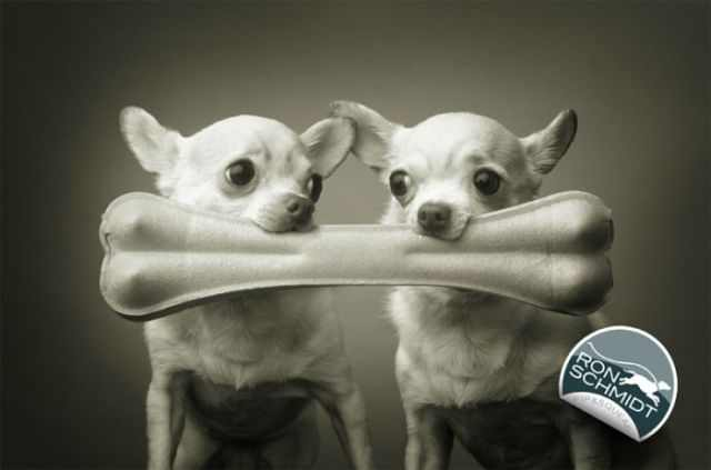 funny and sweet dogs