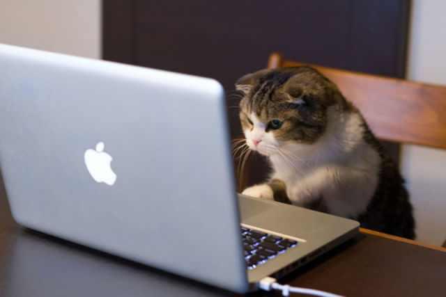 animals cute intelligence