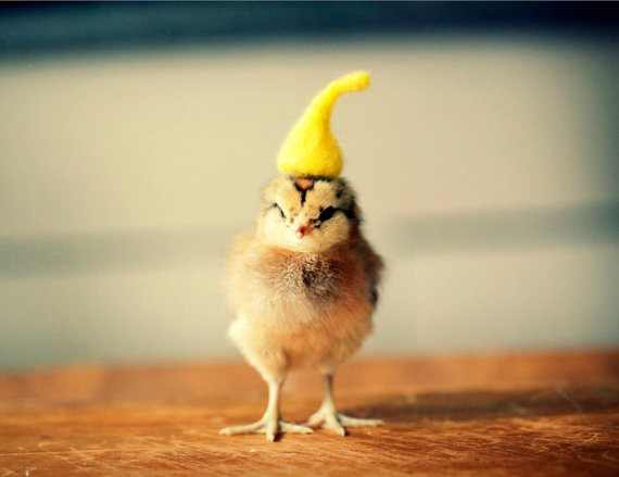 אפרוחים עם כובעים