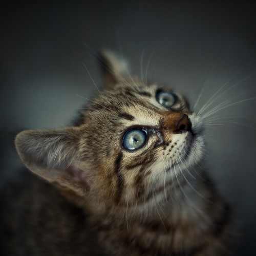 חתולים בשחור ולבן - תמונות מדהימות!