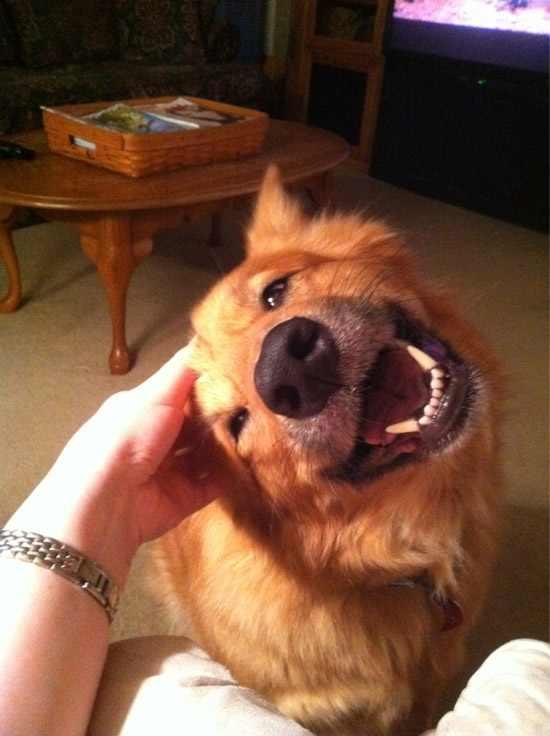 תמונות חמודות של כלבים