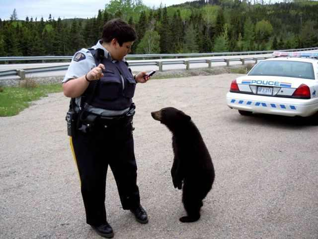 Funny photos of cops