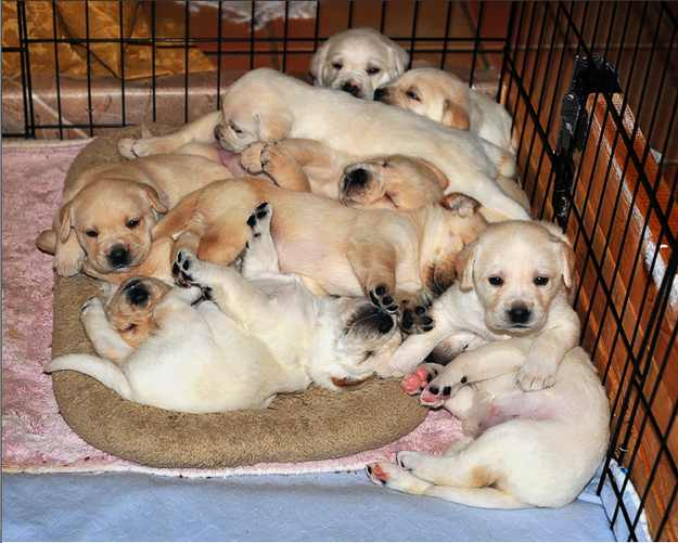 כלבים על מיטות קטנות