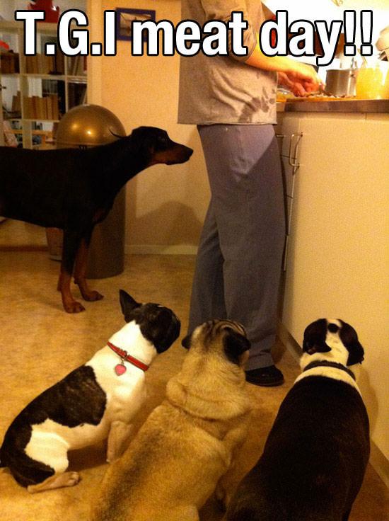 תמונות מקסימות של כלבים