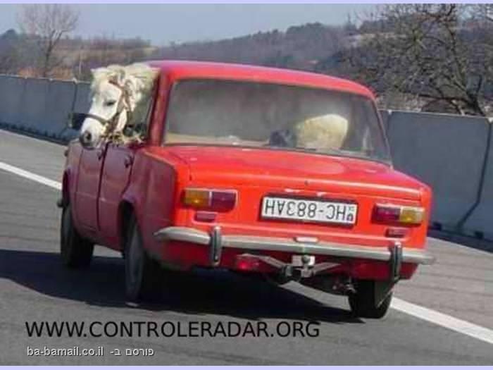 סוס מובל באוטו