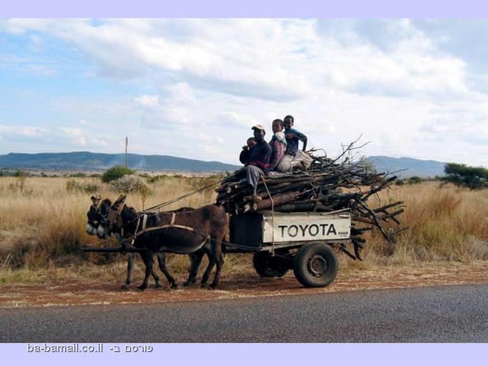 סוס מושך עגלה עם דברים