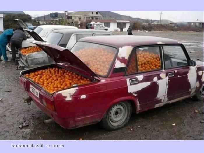 רכבים מלאים בפירות