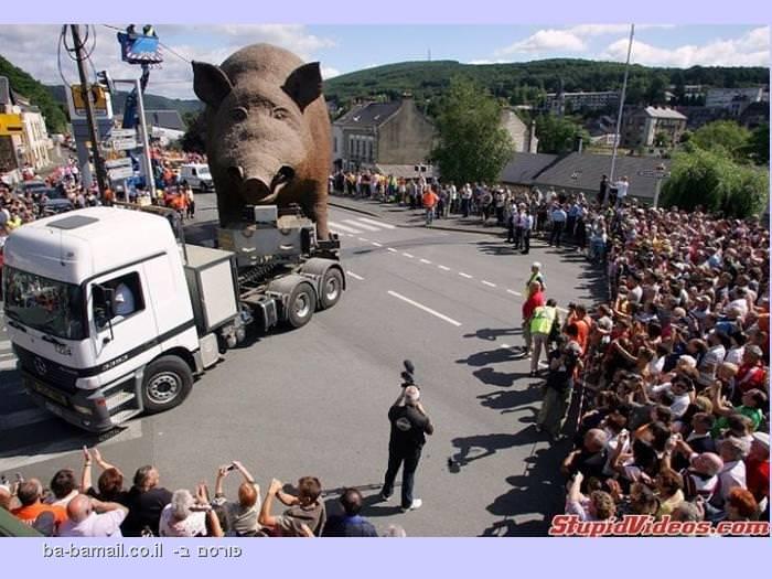 משאית מובילה חזיר ענק