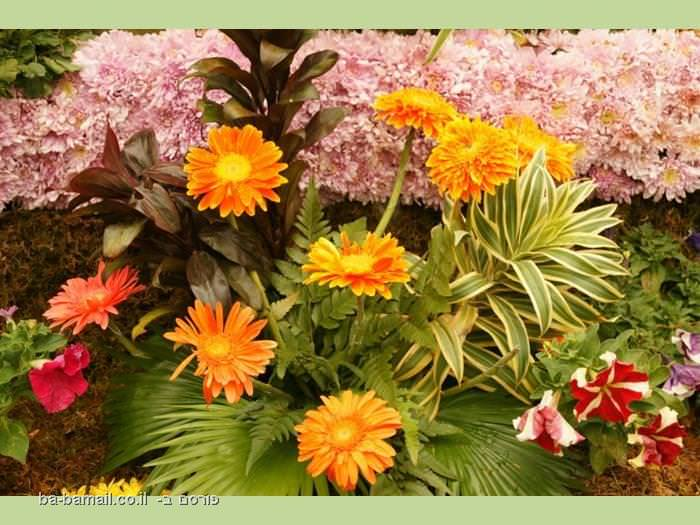 פרחים מדהימים