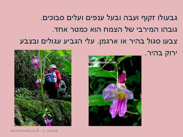 צמח, צמח התוכי, פרח, טבע, פרח התוכי