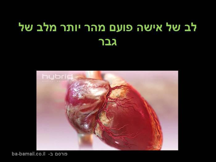 עובדות על גוף האדם